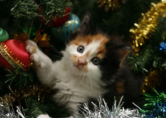 Cat playing with tinsel