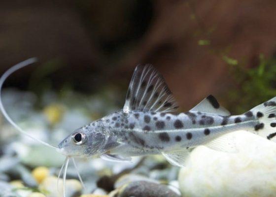 Catfish feeding guide