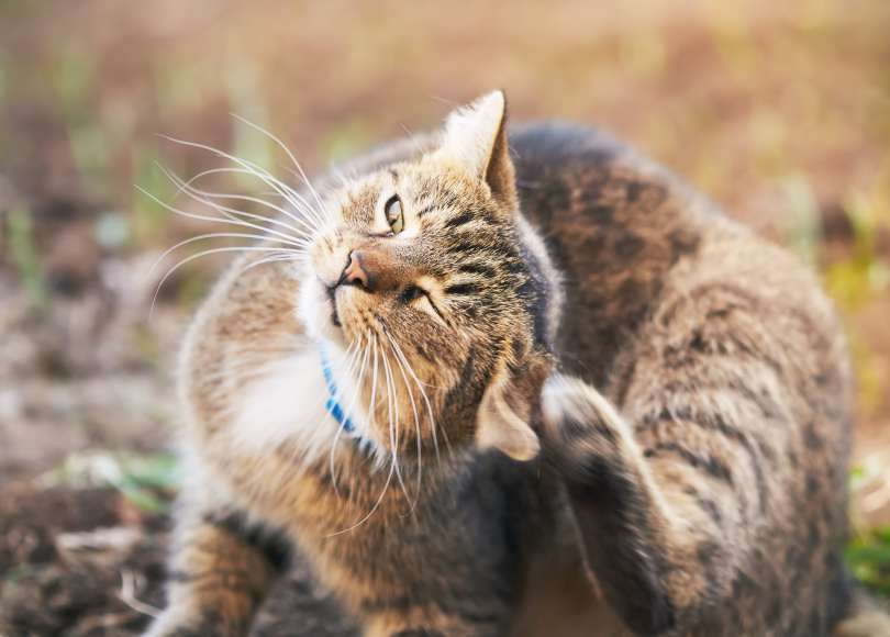 Allergies to cats but not dogs