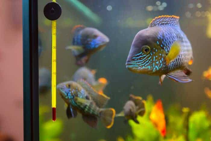 What temperature should a fish tank be?
