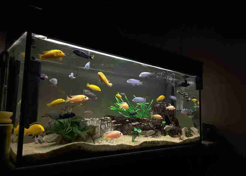 What kind of water is right for a fish tank?