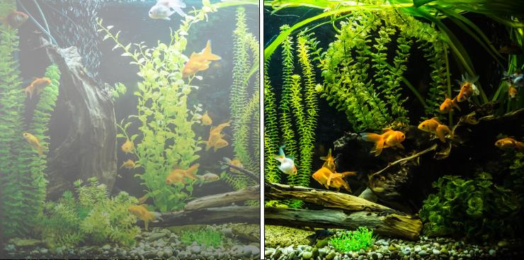 Why does the fish tank water becomes cloudy?