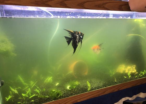 Cloudy water in an aquarium
