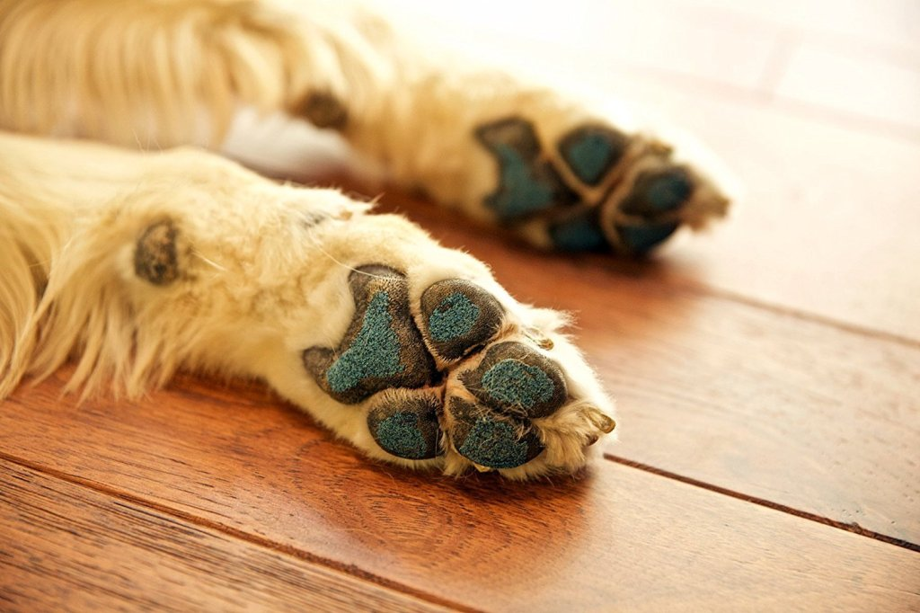 Paw protection for dogs