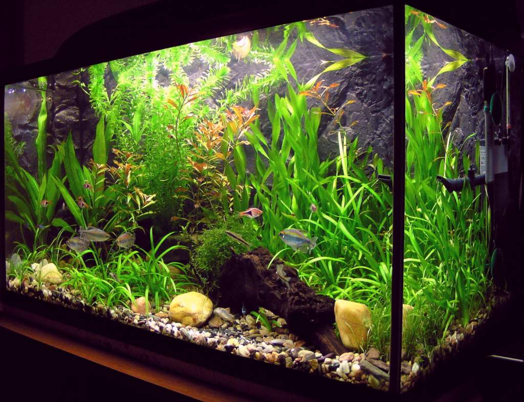 Fish tank with tap water