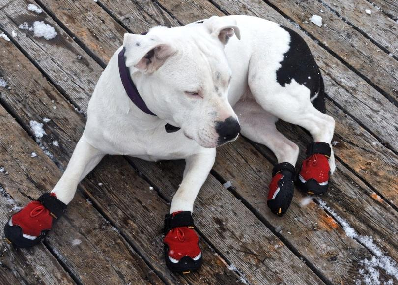 Protection of dogs' paws from reagents