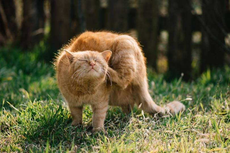 Protecting cats from fleas and ticks